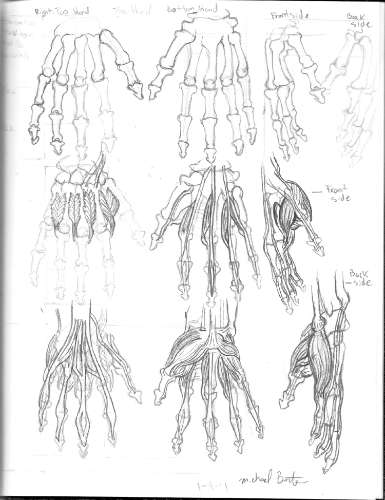 Skeletal Hand Anatomy Images - human body anatomy